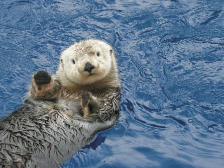 Swimmingfree Violent Passion To Save Marine Animals